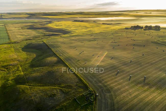 Vista aérea de um campo de corte com fardos de feno brilhando com luz do amanhecer cedo e névoa no fundo com campos de canola floridos, ao norte de Calgary, Alberta, Canadá — Fotografia de Stock