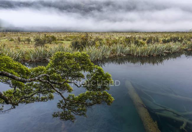 Uma névoa distante, uma filial verde e uma árvore inoperante a água do Lago espelho, Milford Sound; South Island, Nova Zelândia — Fotografia de Stock