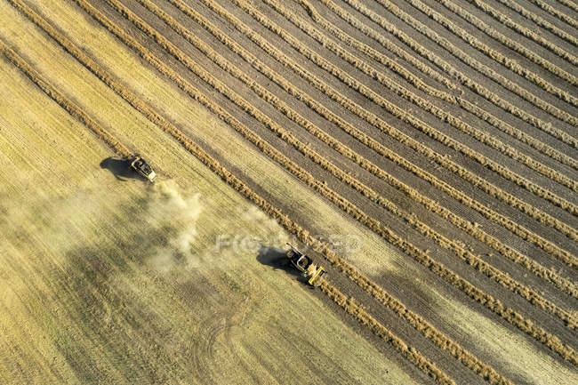 Vista aérea olhando para baixo em duas colheitas combina fileiras de corte canola, Oeste de Beiseker; Alberta, Canadá — Fotografia de Stock