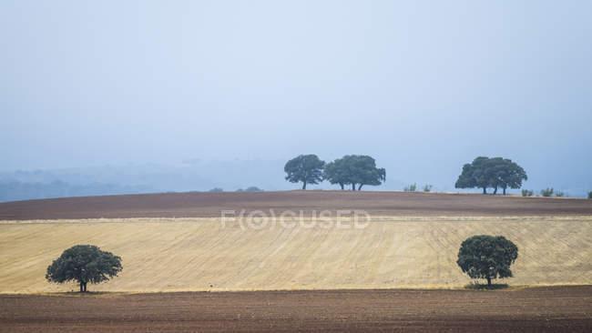 Terras agrícolas com árvores intercaladas e nubladas, Salobre, Província de Albacete, Espanha — Fotografia de Stock