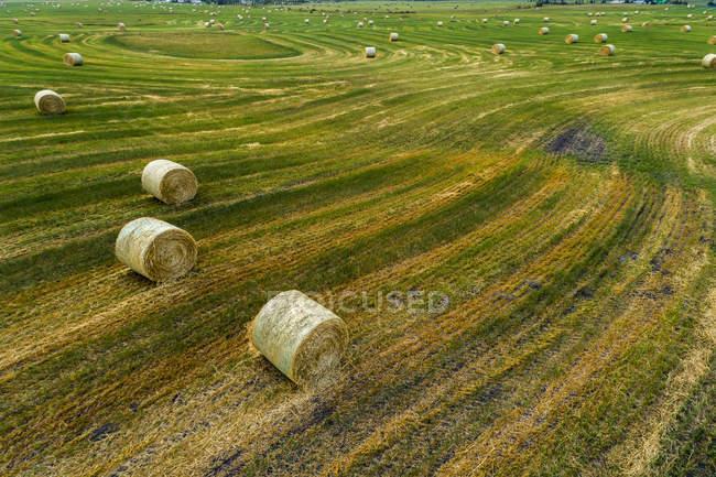 Vista ad alto angolo di una balla di fieno in un campo di taglio, a ovest di Calgary, Alberta, Canada — Foto stock