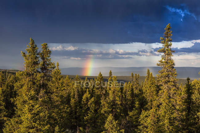 Rainbow poking through storm clouds over a spruce forest in summertime, over the White Mountains, as seen from the Summit Trail; Alaska, United States of America — Stock Photo