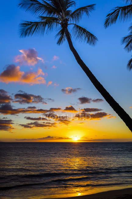 Sun setting through silhouetted palm trees; Wailea, Maui, Hawaii, United States of America — Stock Photo