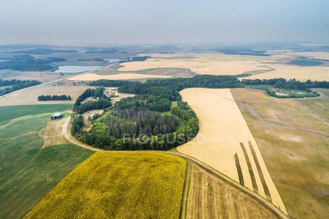 Vista aérea de diferentes culturas em um campo, incluindo girassóis em flor, e grãos dourados, com áreas arborizadas, Erickson, Manitoba, Canadá — Fotografia de Stock