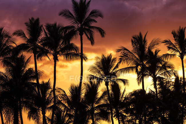 Bright, colourful sky with palm trees silhouetted, Wailea, Maui, Hawaii, United States of America — Stock Photo