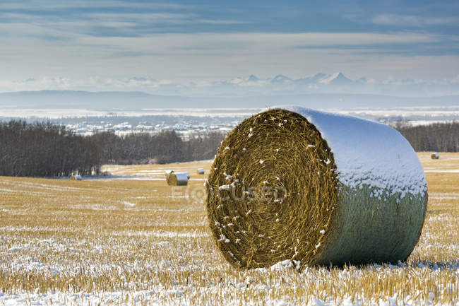 Snow-covered hay bales in a stubble field with snow-covered mountains and foothills in the background with clouds and blue sky, West of Calgary, Alberta, Canada — Stock Photo