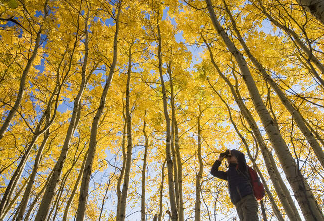 Hiker bird watching in autumn with golden foliage on the aspen trees, Birds Hill Provincial Park; Manitoba, Canada — Stock Photo