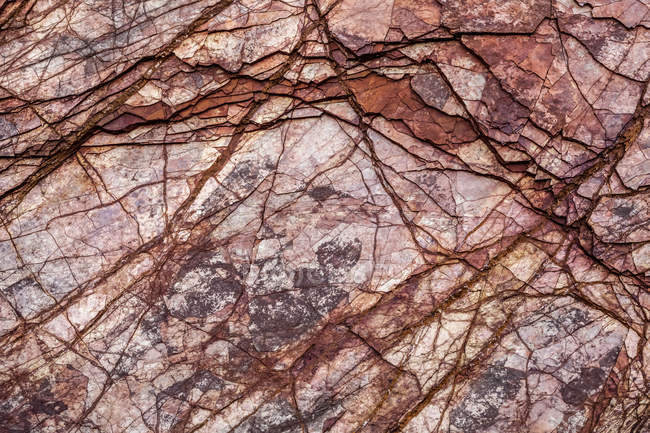 Close-up of a coastal rock face along the shore of Minas Basin, Nova Scotia, Canada — Stock Photo