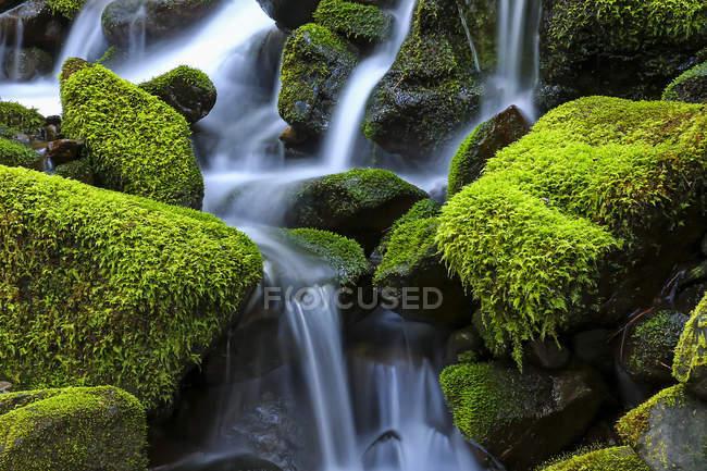 Покрытые Моссом скалы с каскадной водой, Денвер, Колорадо, США — стоковое фото