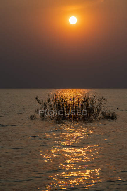 Riflessione sul tramonto del sole attraverso canne con nidi di uccelli tessitori sul lago Tanganica, Parco nazionale delle montagne Mahale, Tanzania — Foto stock
