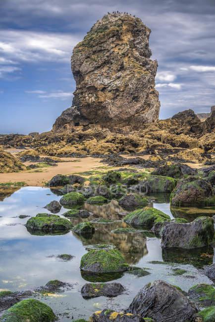 Море стек з камінням в басейні припливу в Marsden затоки біля північного східного узбережжя Англії; Південні щити, Тайні і знос, Англія — стокове фото