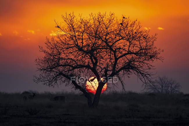 Pôr-do-sol dramático com o sol atrás de uma árvore silhueta e o céu brilhando vermelho e amarelo, Denver, Colorado, Estados Unidos da América — Fotografia de Stock