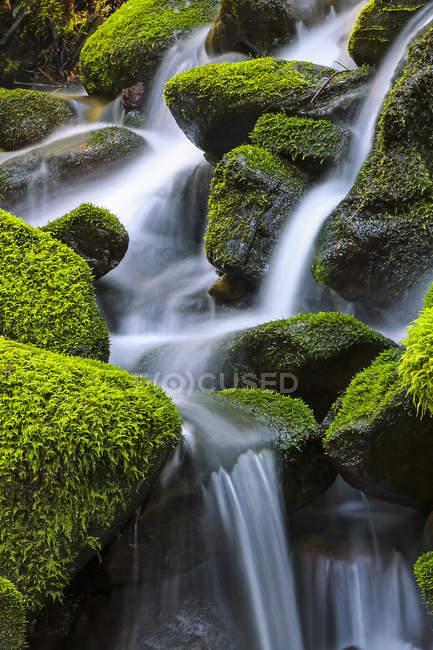 Rocce ricoperte di muschio con acqua a cascata, Denver, Colorado, Stati Uniti d'America — Foto stock