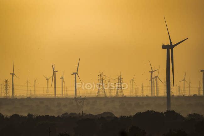 Wind farm in Northern India; Rajasthan, India — Stock Photo
