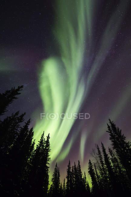 Aurora boreal sobre árboles siluetas en el sitio de recreación del estado de Clearwater en Delta Junction; Alaska, Estados Unidos de América - foto de stock