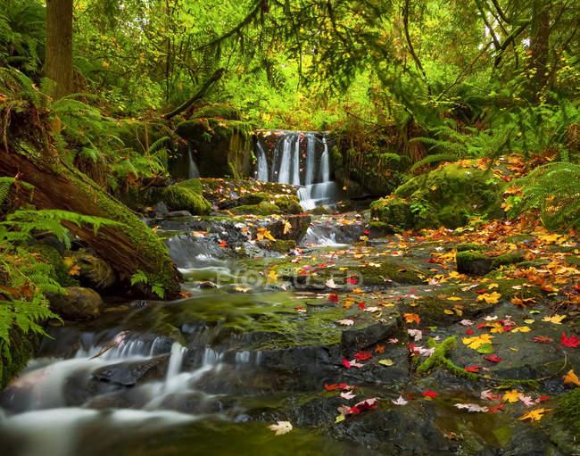 Wasserfall im Anderson Creek im Herbst; britische Columbia, Kanada — Stockfoto