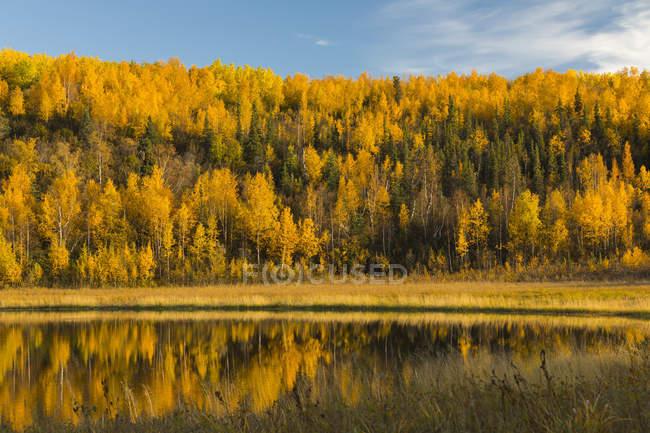 Autumn colours reflect in a lake in Interior Alaska; Alaska, United States of America — Stock Photo