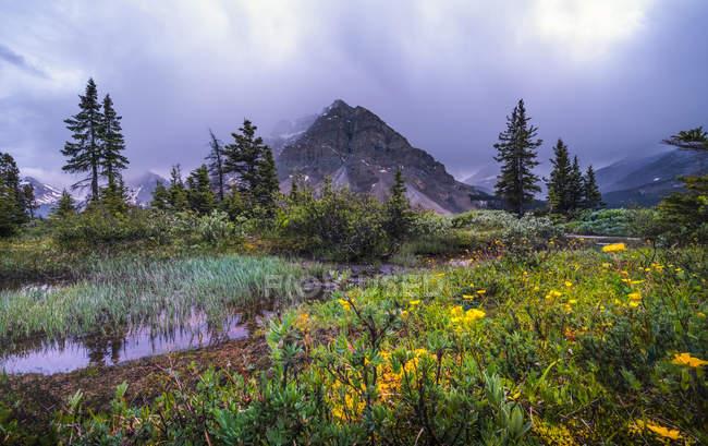 Озеро Боу с непроходимыми Роки-Маунтинс и полевыми цветами, Национальный парк Банфф; Альберта, Канада — стоковое фото