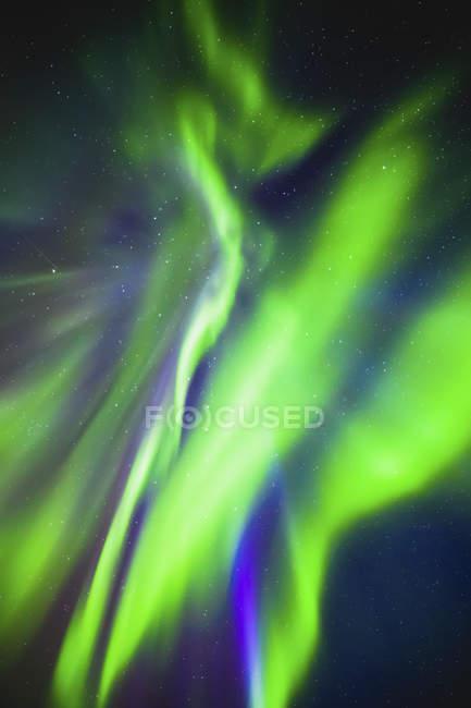 Зеленое перламутровое северное сияние в звездном небе, Национальный парк Лосиный остров; Альберта, Канада — стоковое фото