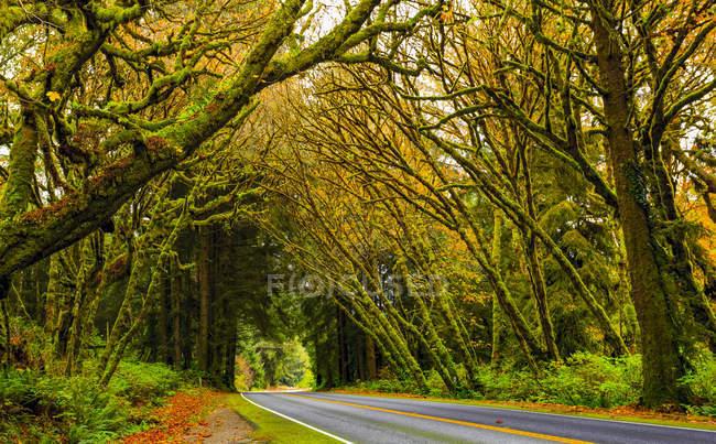 Road through the California Redwoods; California, United States of America — Stock Photo