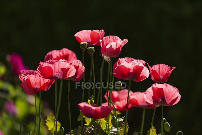 Ботанический сад Ванкувера; Ванкувер, Британская Колумбия, Канада — стоковое фото