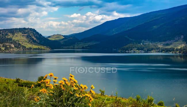 Flores silvestres e Lago Kalamalka no Vale Okanagan; British Columbia, Canadá — Fotografia de Stock