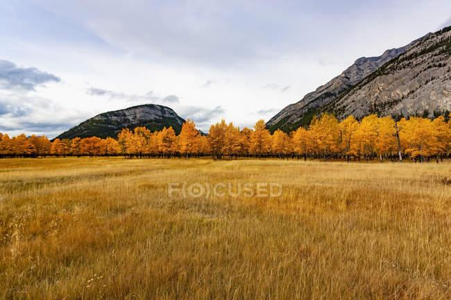 Herbstfarbenes Laub und Gras im Banff Nationalpark; alberta, canada — Stockfoto