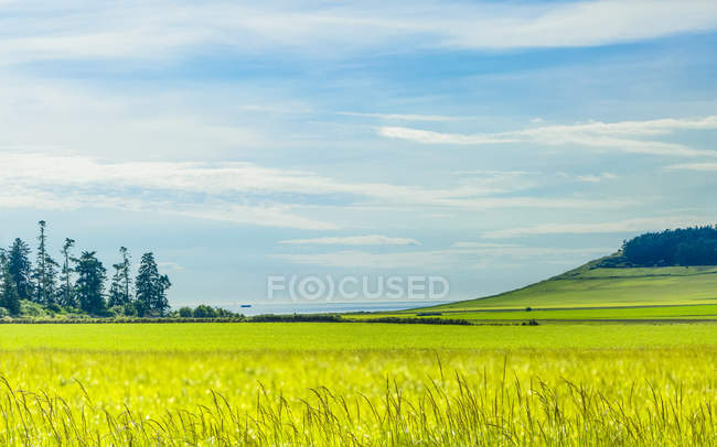 Green fields along the coast of Whidbey Island at Eby Landing; Whidbey Island, Washington, United States of America — Stock Photo