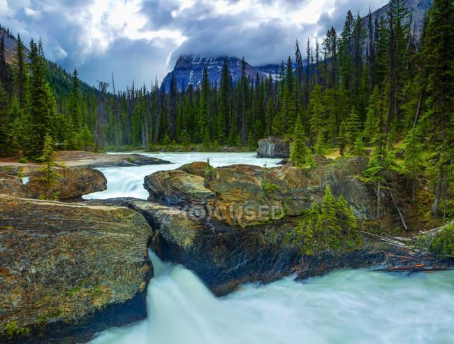 El puente natural y el río Kicking Horse, Parque Nacional Yoho; Columbia Británica, Canadá - foto de stock