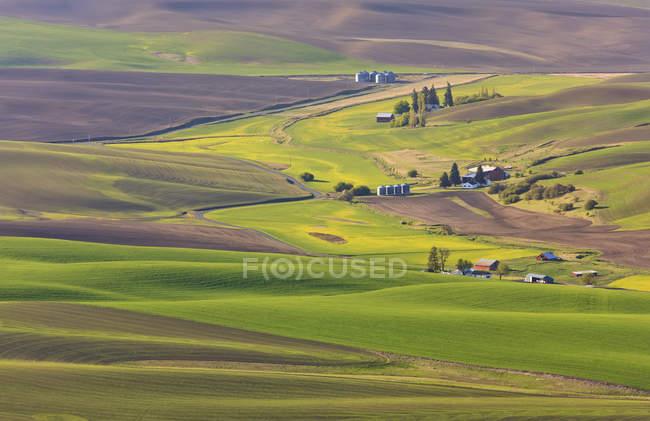 Farms and farmland around Palouse in Eastern Washington; Washington, United States of America — Stock Photo