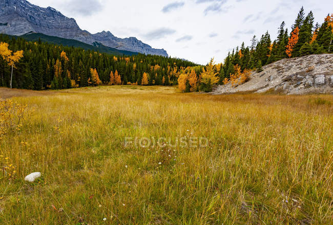 Autumn coloured foliage and grass in Banff National Park; Alberta, Canada — Stock Photo