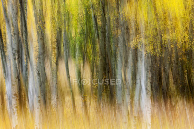 Forest of autumn colours in blur; British Columbia, Canada — Stock Photo