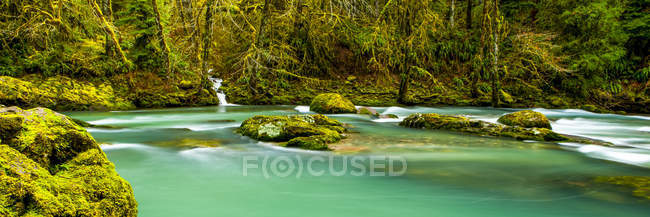 Rainforest and tranquil river with turquoise water; Oregon, United States of America — Stock Photo