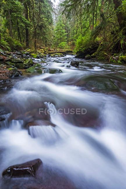 Corriente que corre a través de la selva tropical de la costa de Oregon; Oregon, Estados Unidos de América - foto de stock