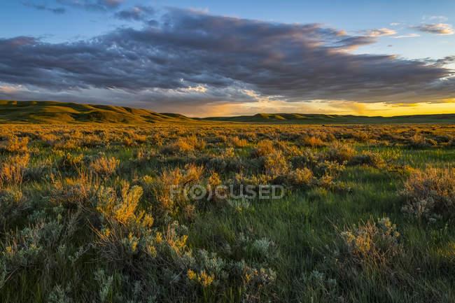 Vast landscape of Grasslands National Park at sunset; Saskatchewan, Canada — Stock Photo
