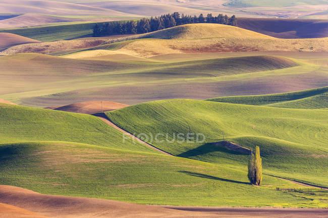 Colourful rolling hills of farmland around the Palouse region in Eastern Washington ; Washington, États-Unis d'Amérique — Photo de stock