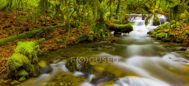 Bridal Veil Falls and stream; British Columbia, Canada — Stock Photo