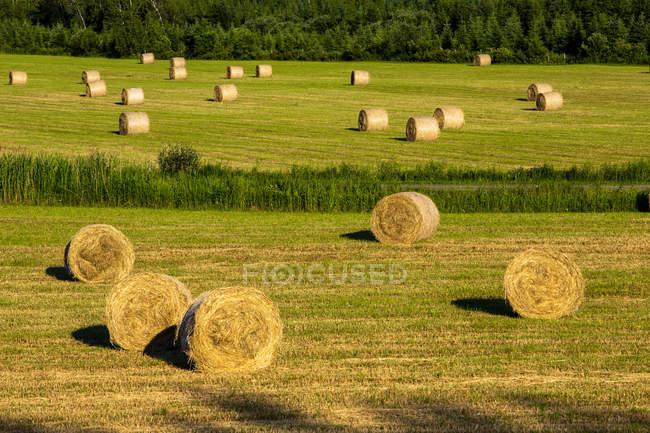 Круглые тюки сена на сеновале с лесом на заднем плане; Бромское озеро, Вилле де Лак Бром, Квебек, Канада — стоковое фото