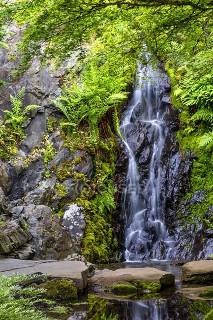 Queen Elizabeth Park; Ванкувер, Британська Колумбія, Канада — стокове фото