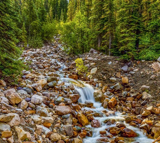 Flusso che scorre sulle rocce in una foresta; Alberta, Canada — Foto stock
