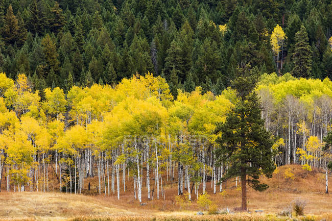 The Cascades and the Okanagan Valley in autumn colours; British Columbia, Canada — Stock Photo