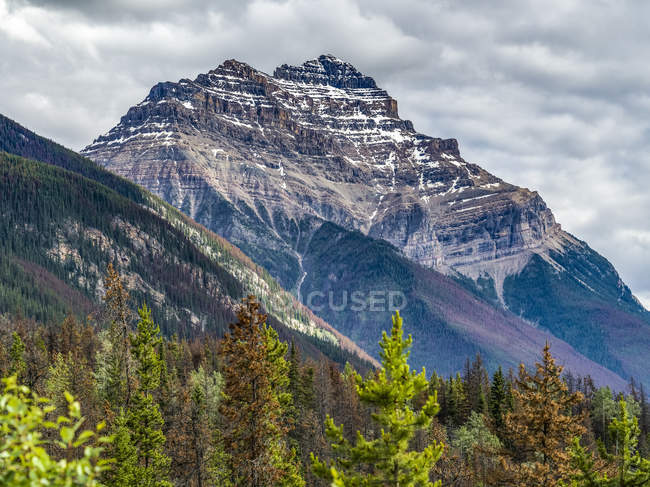 Rugged rocky mountains and forest along the Icefield Parkway, Improvement District No. 12; Alberta, Canada — Stock Photo