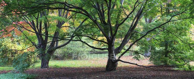 Деревья в Arnold Arboretum, Boston, Massachusetts, USA — стоковое фото