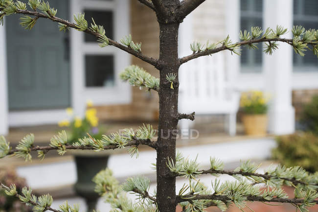 Close up of a tree in front of a house. — Stock Photo