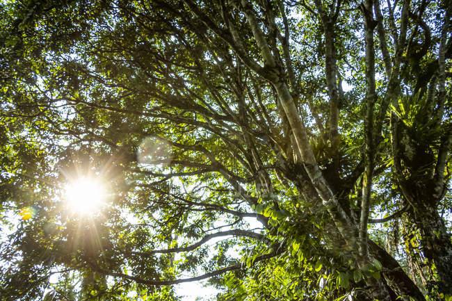 Болотная растительность с солнечным всплеском через деревья, Бигоди водно-болотного заповедника, недалеко от Кибале леса; Западный регион, Уганда — стоковое фото