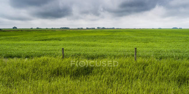 Lush green fields of farmland under an overcast sky on the Alberta prairies, Rocky View County; Alberta, Canada — Stock Photo