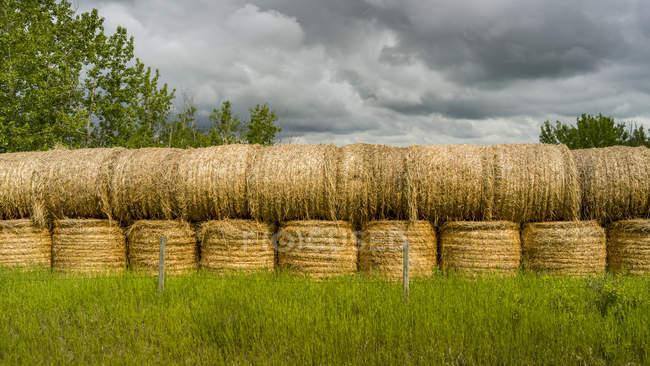 Сварочные тюки сена; Альберта, Канада — стоковое фото