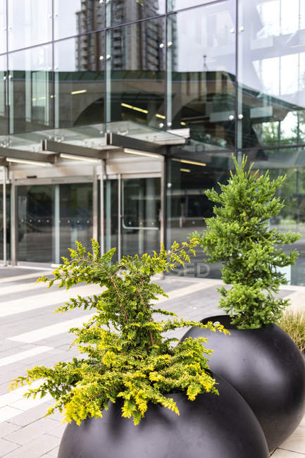 Entrance doors to a glass facade building with trees in planters outside, seen walking from Surrey Central to Guildford; Surrey, British Columbia, Canada — стоковое фото
