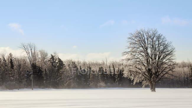 Arbres couverts de glace et champ neigeux ; Sault St. Marie, Michigan, États-Unis d'Amérique — Photo de stock