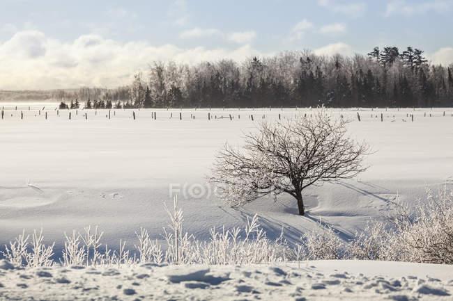 Alberi ricoperti di ghiaccio e un campo innevato con recinzioni; Sault St. Marie, Michigan, Stati Uniti d'America — Foto stock